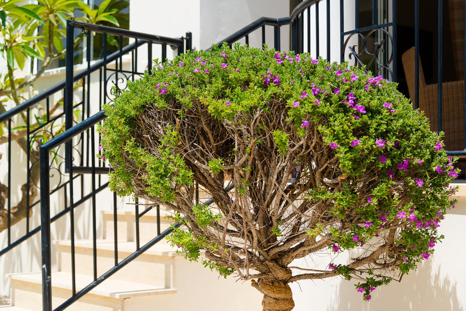 Marina Villa   Coral Bay Holiday Villas